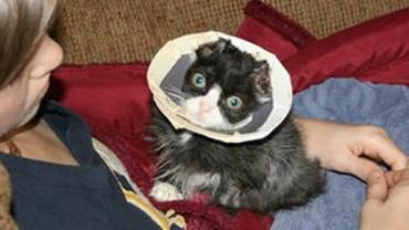 Justin, kot, który uszedł z życiem cudem z pożaru, wraca do formy! Zobaczcie, jak teraz wygląda!
