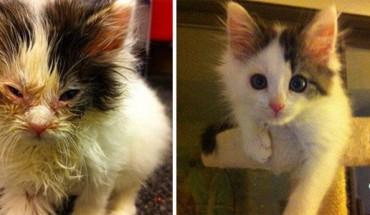Te koty były o włos od śmierci… Zobaczcie, jak się zmieniły dzięki opiece i miłości człowieka!