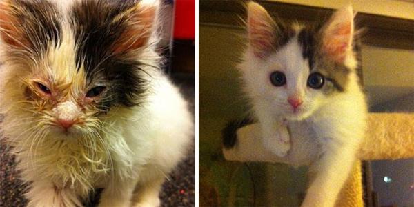 Te koty były o włos od śmierci... Zobaczcie, jak się zmieniły dzięki opiece i miłości człowieka!