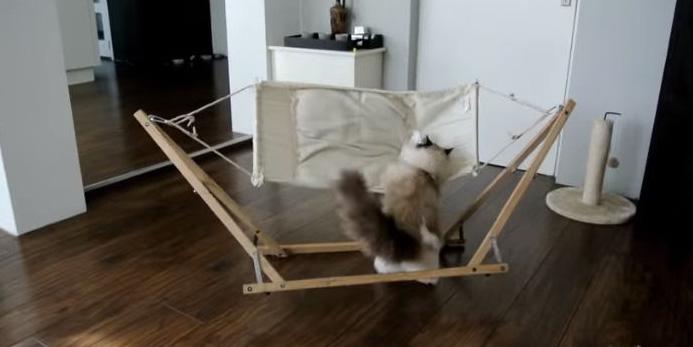 Kot vs hamak. Nie możecie tego przegapić :)