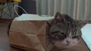 Poznajcie Maru, kota, którego sposoby na spędzanie wolnego rozbawią was do łez!