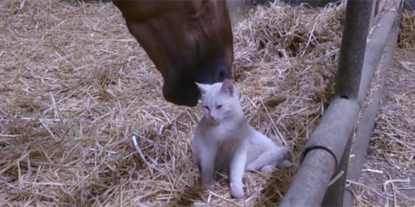 Mały kot wpadł do zagrody konia... Nie uwierzysz w to, co stało się później!