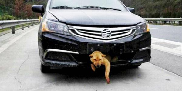 Usłyszał ciche szczekanie dochodzące spod zderzaka jego samochodu! Postanowił to sprawdzić. Nie mógł uwierzyć w to, co zobaczył!