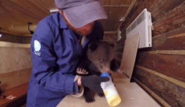 Widzieliście kiedyś jedzącego niedźwiadka? Nie? To zobaczcie! Słodziak :)