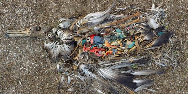 Ludzka ignorancja potrafi prowadzić do tragicznych skutków. Te zdjęcia pokazują to znakomicie!