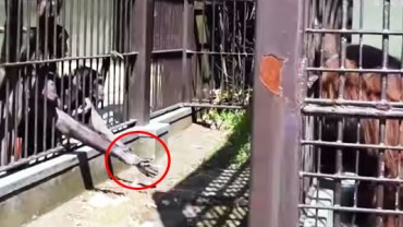 Na akty dobroci stać nie tylko ludzi! Zobacz, w jaki sposób pomagają sobie zwierzęta w niewoli!
