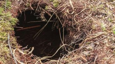 Spacerując po lesie, dostrzegł wykopany z ziemi dół! Całe szczęście, że zajrzał do środka!