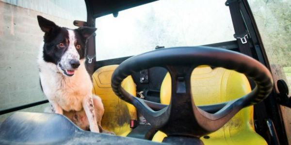 Ten pies zatrzymał ruch na szkockiej autostradzie. Wykorzystał do tego... ciągnik!