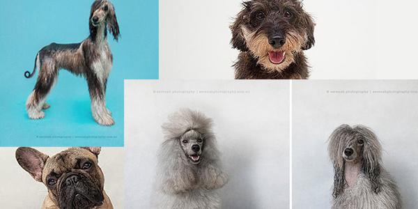 Suchy pies vs mokry pies. Zobaczcie, jak woda zmienia wygląd zwierzaków!