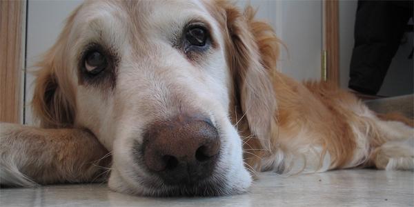 Stary pies codziennie odwiedzał jego dom. Przyczyna tych wizyt okazała się niezwykła!