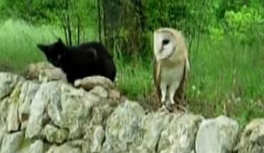 Czy przyjaźń kota i sowy jest możliwa? Przekonajcie się sami!
