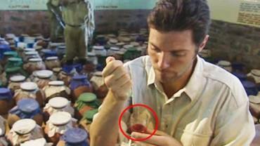 Do naczynia z ludzką krwią wlano kilka kropel jadu węża. Przeszły mnie dreszcze, gdy zobaczyłem wynik eksperymentu!