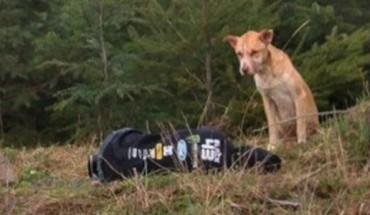 Zagłodzony pies był zbyt przerażony, by przyjąć pomoc od obcych. Sprawdź, jak skończyła się jego historia!