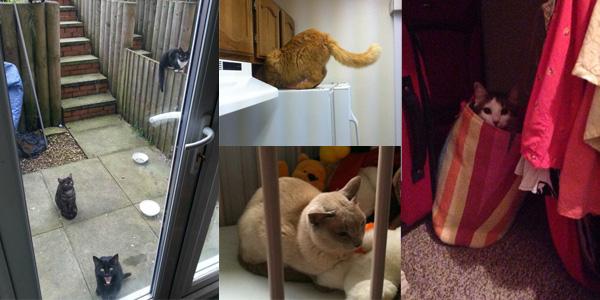 To nie mój kot! Zobacz zdjęcia niespodziewanych gości ;)