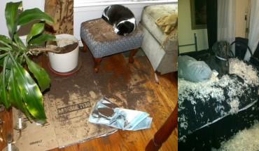 Te zwierzaki pozostawione same sobie zrobiły mega demolkę… ale jak tu ich nie kochać? :)