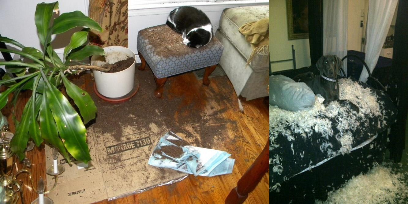 Te zwierzaki pozostawione same sobie zrobiły mega demolkę... ale jak tu ich nie kochać? :)
