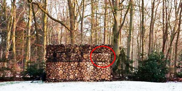 Wygląda jak stos drewna, ale gdy podejdziesz bliżej, dostrzeżesz coś niewiarygodnego. Nie mogłam uwierzyć w to, co zobaczyłam!