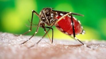 Kilka ciekawostek na temat komarów, o których nie miałeś pojęcia. Numer 10 całkowicie mnie zaskoczył!