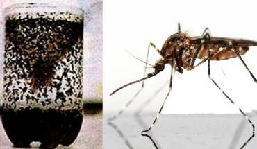 Jak skutecznie pozbyć się komarów? Przedstawiamy niezawodny sposób walki z uciążliwymi insektami! Zobacz, jakie to proste!