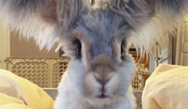 Poznajcie Welly – królika, który podbija internet. Uważajcie, bo gdy go raz zobaczycie – będziecie chcieć takiego samego!