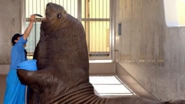 Nie zdawałam sobie sprawy, że te zwierzęta są tak ogromne… dopóki nie zobaczyłam ich w towarzystwie ludzi. Numer 19… OMG!