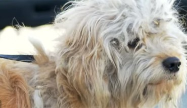 Ten bezdomny pies przeszedł prawdziwą metamorfozę. Zobaczcie, jak trochę ludzkiej troski i opieki odmieniło jego życie!