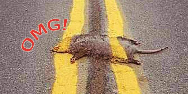Największe drogowe absurdy zaobserwowane na polskich drogach. Zobaczyć coś takiego... bezcenne. Numer 6 to prawdziwa porażka. OMG!