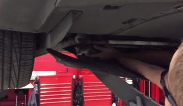 Kot postanowił zamieszkać pod silnikiem auta… Jego eksmisja nie była łatwa!