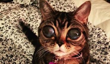 Poznajcie Matyldę – kota, który przybył do nas kosmosu ;)