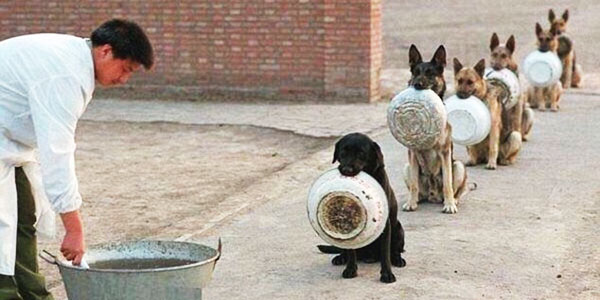 To zdjęcie poruszyło miliony internautów! Zobacz, jakiej dyscyplinie poddawane są psy w chińskiej akademii policyjnej!