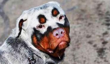 25 najpiękniejszych i najbardziej niepowtarzalnych psów na świecie. Chce je wszystkie! Numer 8 jest cudowny!