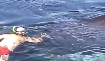 Zaryzykowali życie, by pomóc wielorybowi. Zobaczcie, jak się im odwdzięczył!