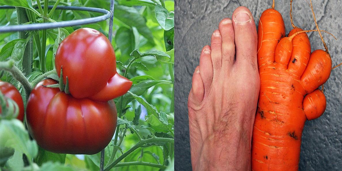 27 warzyw o niezwykłym kształcie, które wyglądają jak coś zupełnie innego