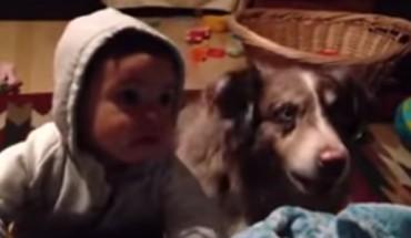 """Kobieta poprosiła swoje dziecko, żeby powiedziało """"Mama"""". Jednak to reakcja psa bawi do łez!"""