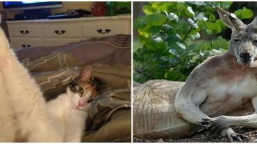 20 zwierząt, od których mógłby się uczyć sam Casanova. Zobaczcie mistrzów uwodzenia w akcji :)