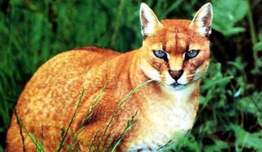 Najpiękniejsze i najrzadsze koty na kuli ziemskiej! Numer 8 jest cudowny!