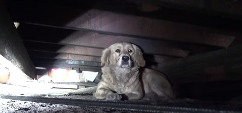 Ten bezdomny pies na początku nie pozwalał się do siebie zbliżyć, ale dzięki pomocy stał się na nowo przyjaznym stworzeniem!
