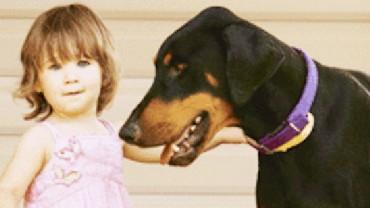 Kochająca rodzina bez wahania adoptowała tego pięknego dobermana. To, co zrobił 4 dni później, całkowicie odmieniło ich życie…
