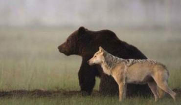 Para niezwykłych przyjaciół przeczy prawom natury!