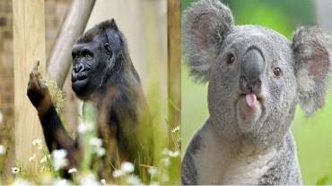 Te zwierzęta naprawdę miały zły dzień, pewnie gorszy od twojego