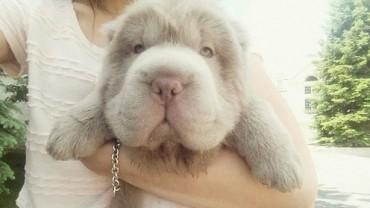 Ten uroczy pies-niedźwiadek to najsłodszy zwierzak, jakiego w życiu widziałam!