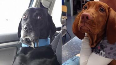 20 zwierzaków, które nie są zachwycone z powodu wizyty u weterynarza