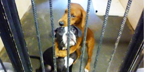 Ta fotografia uratowała ich przed pewną śmiercią! Poznajcie niesamowitą historię Kala i Keira