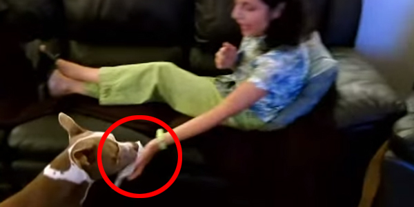 Powiedziała swojemu pit bullowi, że źle się czuje. Reakcja psa naprawdę zaskakuje!
