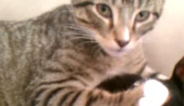 Ten kociak czekał z niecierpliwością, aż jego chory przyjaciel wróci od weterynarza. To, co stało się potem, rozjaśniło mój dzień!