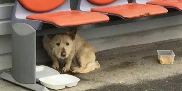 Ten bezdomny pies spędził całą mroźną zimę, błąkając się po ulicach. Gdy wreszcie przyszła pomoc, nie mogłam opanować łez wzruszenia...