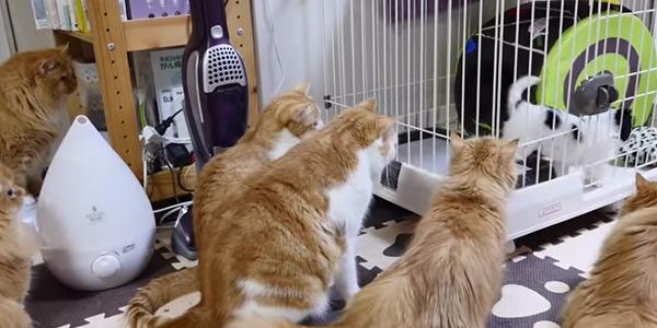 Przynieśli do domu nowego ślicznego szczeniaka. Jednak koty nie podzieliły ich entuzjazmu. Zobacz, jak zareagowały!