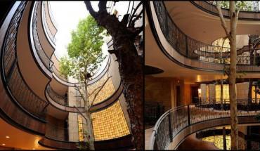 Kilka przykładów na to, jak wkomponować drzewa w nowo powstałe budowle!
