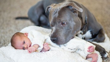 Chcieli, aby ich agresywny pitbull odszedł z domu. Wtedy on zrobił coś, czego nikt się nie spodziewał!