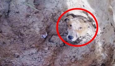 Ten pies został pochowany żywcem w ziemi… Zobaczcie, jak potoczyły się jego losy